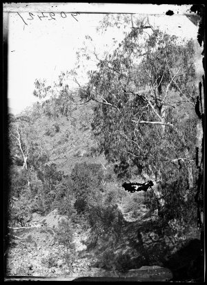 View of bushland near Petersen's battery, Hill End