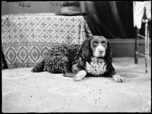 Myers' dog