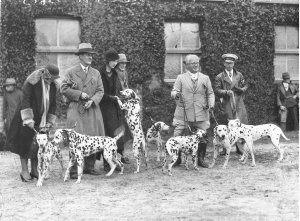 A group of Dalmatians and their owners before the judges