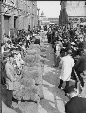 Judging at the Sheep Show
