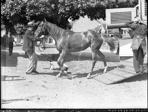 A yearling being led out of a horse-float at Inglis's Yearling Sales