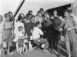 Children's Day, free milk straight from the cow!