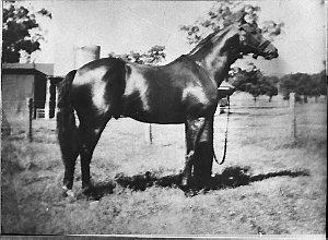 Mr W Mackay (Scone); pictures of a horse