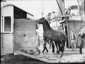 Arrival of English horse