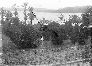 A scene of a rural general store on the waterfront with cultivated trees in foreground