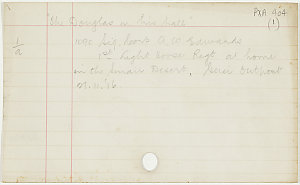 1090 Sig. Corp. A. W. Edwards, 1st Light Horse Regt. in Palestine