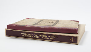 A natural history of the lepidopterous insects of New South Wales / collected, engraved, and faithfully painted after nature by John William Lewin.