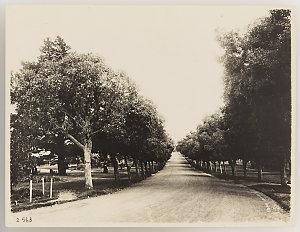 Series 17: Rural and bush scenery, ca. 1921-1923