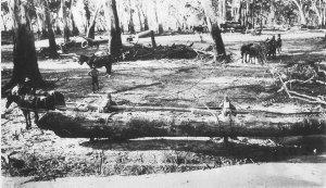 Rolling log onto timber jinker in Barham Forest - Barham, NSW