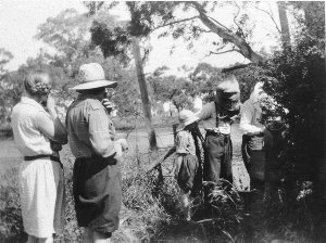 Collecting honey from bee hive - Trundle, NSW