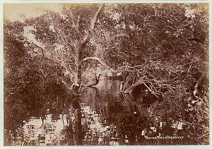 Water maze, Newport