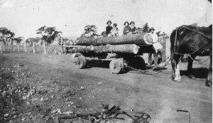 Carting logs on Buralyang property - Ardlethan, NSW