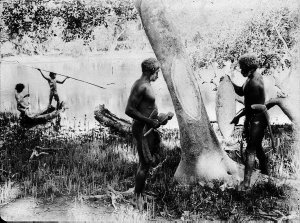 Two Aboriginal men removing bark from mangrove tree for shield. Two boys in background spearing fish from canoe - Port Macquarie area, NSW