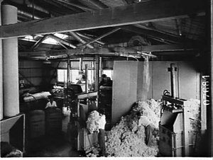 Wool processing, K.V. Chapman, wool merchants, stores and processing division, Botany