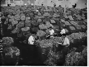 Wool buyers inspecting bales of wool, K.V. Chapman, wool merchants, Pyrmont