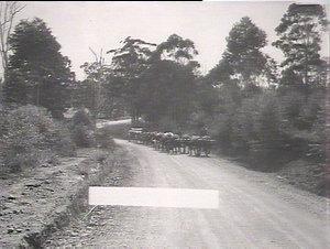 On the Pacific Highway, near Woolgoola [i.e. Woolgoolga ?]