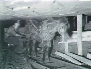 Katoomba Mines: horse haulage in low seam