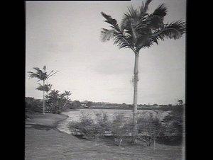 View in the park, Centennial Park