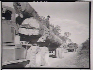 Giant logs for the mill