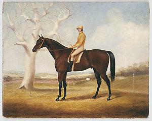 Race horse and jockey