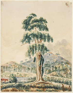Item 17: Boorel Port Stephens, ca. 1824-1836 / Robert Hoddle