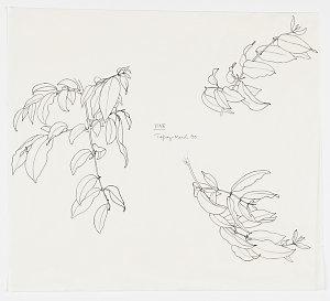 File 68: Vines, 1968-2007 / drawn by William T. Cooper