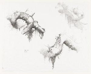 File 3: Rainforest, botanicals, 1967-2014 / drawn by William T. Cooper