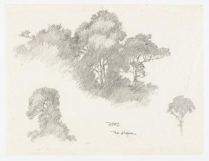 File 1: Rainforest, botanicals, 1967-2014 / drawn by William T. Cooper