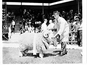 Sheep Show 1966, Sydney Showground