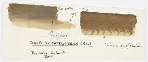 File 55: Reptiles, 1968-1991 / drawn by William T. Cooper