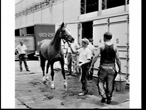 Racehorses housed in a container arrive on the container ship Discovery Bay, White Bay terminal