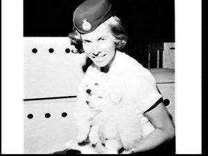 300 puppies arrive on a Boac cargo flight, Mascot