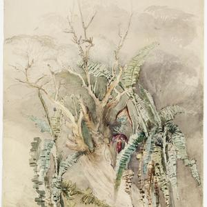 Georgiana Lowe - album of drawings of New South Wales views, ca. 1842-1850